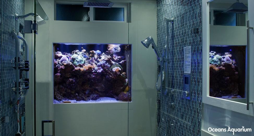 homes with their own shark tanks 11