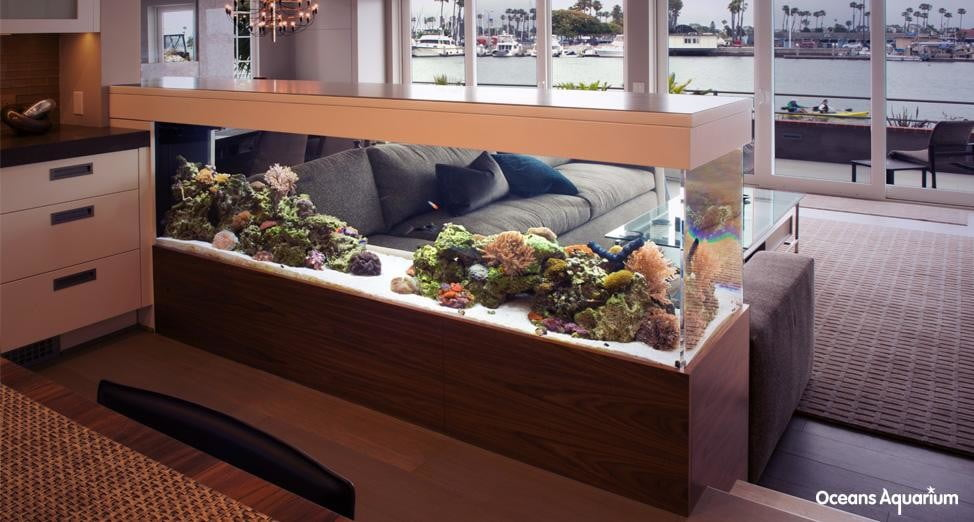 homes with their own shark tanks 14