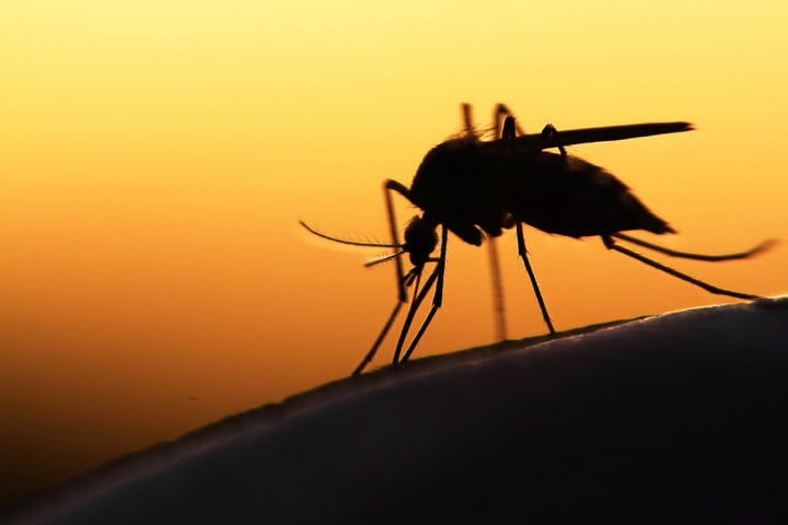 mosquitoes released epa 42189902 l