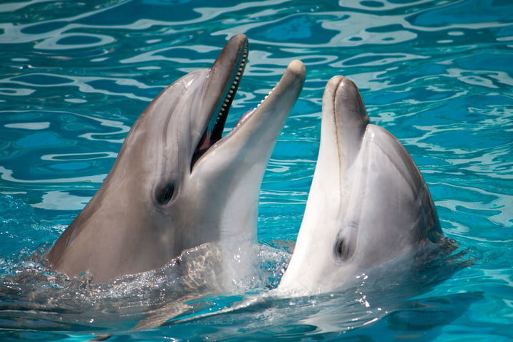 dolphins natural language processing 7420254  pair of swimming in water