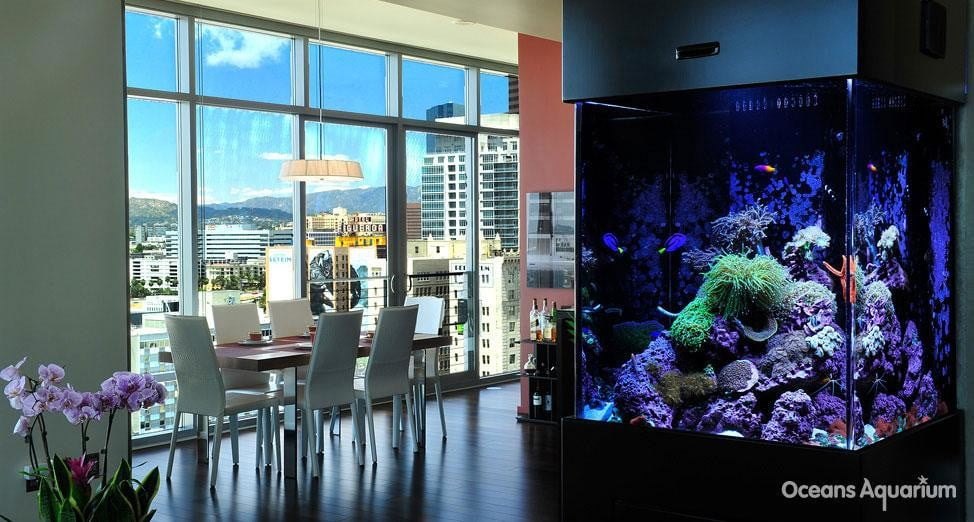 homes with their own shark tanks ag3