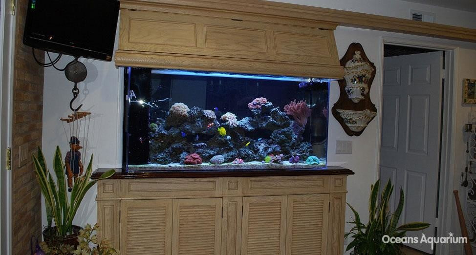 homes with their own shark tanks ag6