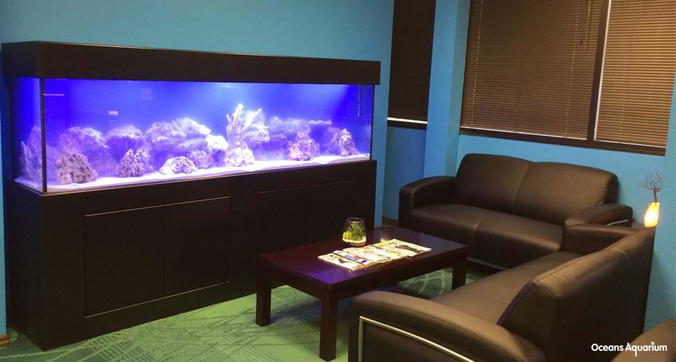 homes with their own shark tanks alx1