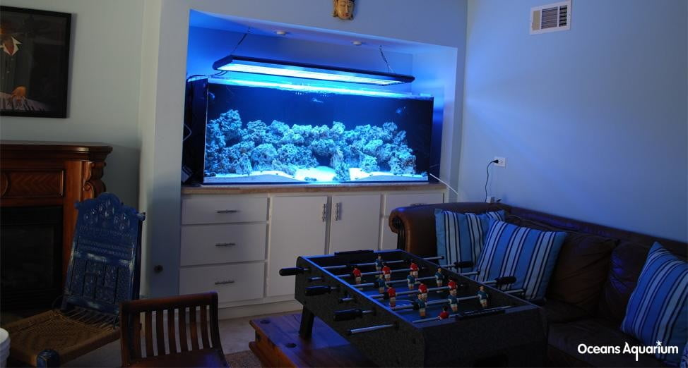 homes with their own shark tanks bb1