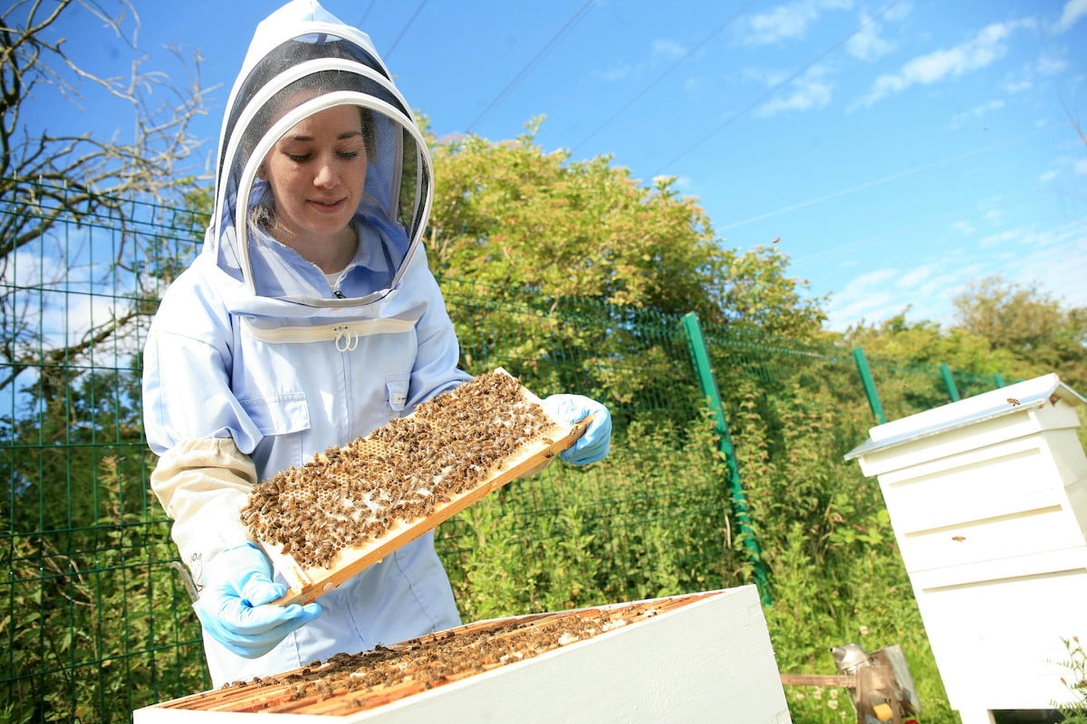 bentley motors creates a buzz as it enters the honey business bees 2