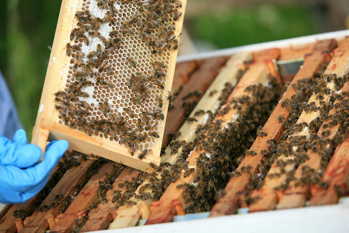 bentley motors creates a buzz as it enters the honey business bees 3