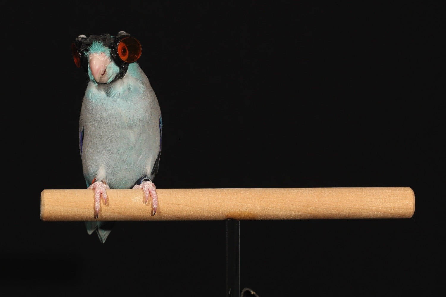 parrot goggles flying robots bird with laser img 9626 2