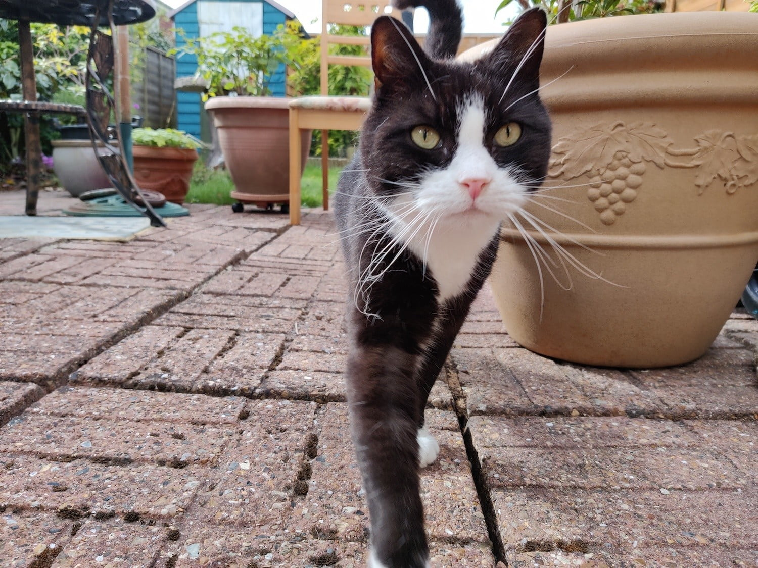 oneplus 8t review camera cat
