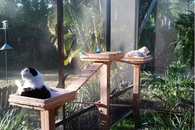 furniture and homes that are made for cat people catio showcase