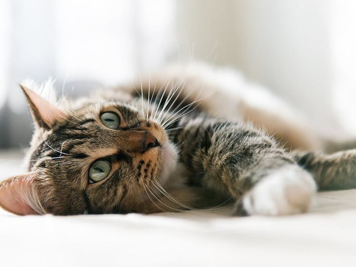 science proves it watching cat videos is good for you cute