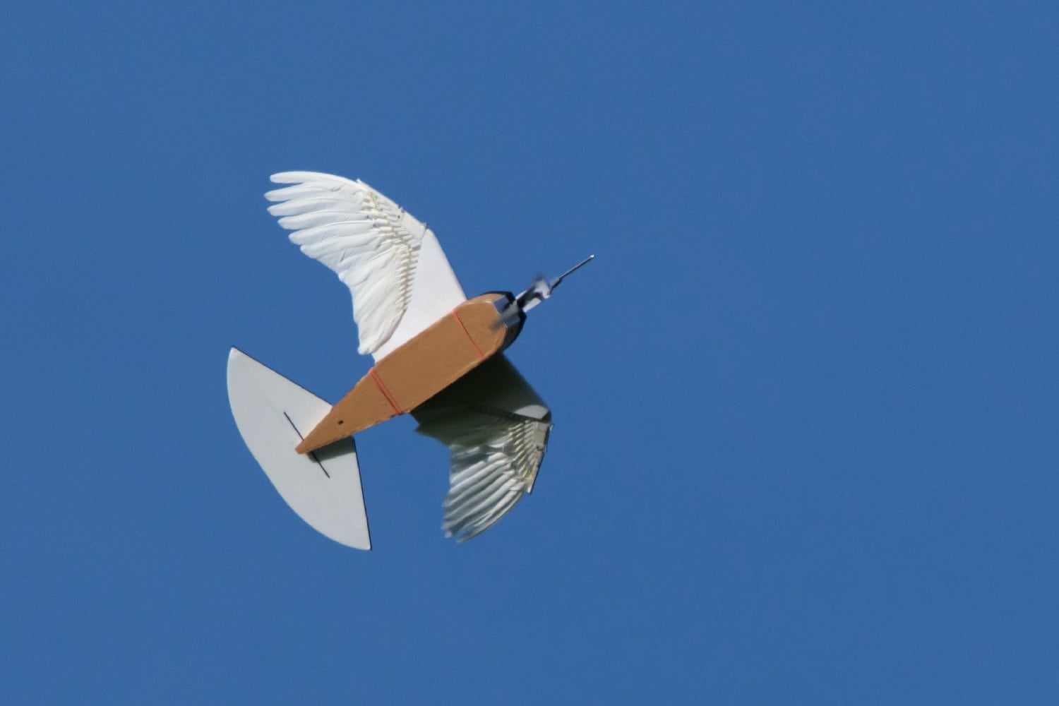 pigeon bot feather drone takes flight dl0 0218 2