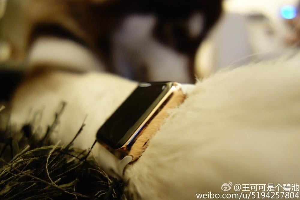 dog owns two apple watch edition news paw