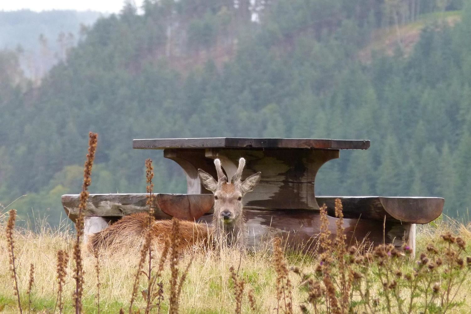 retreat from society and relax in these idyllic cabins around the world eagle brae highland log 16