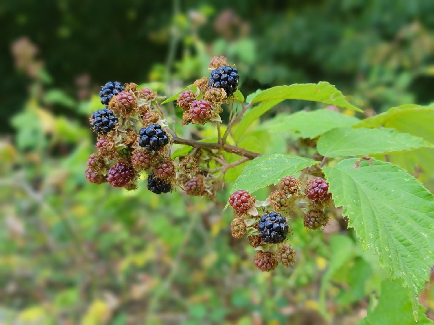 samsung galaxy note 20 ultra review berries