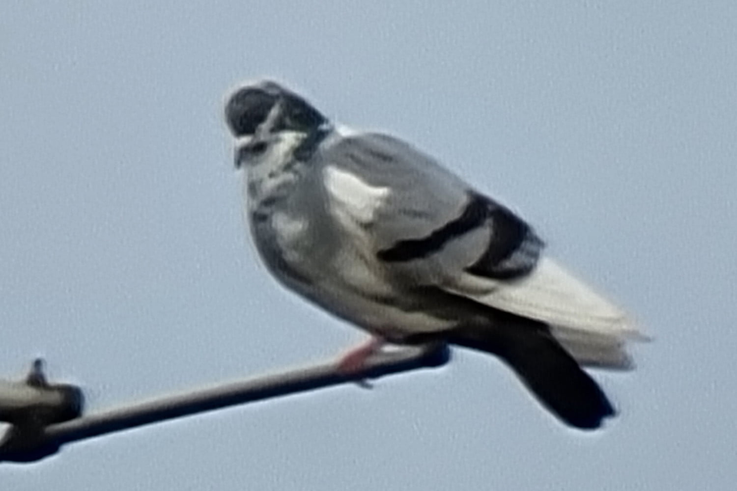 samsung galaxy s21 ultra review 100x zoom pigeon