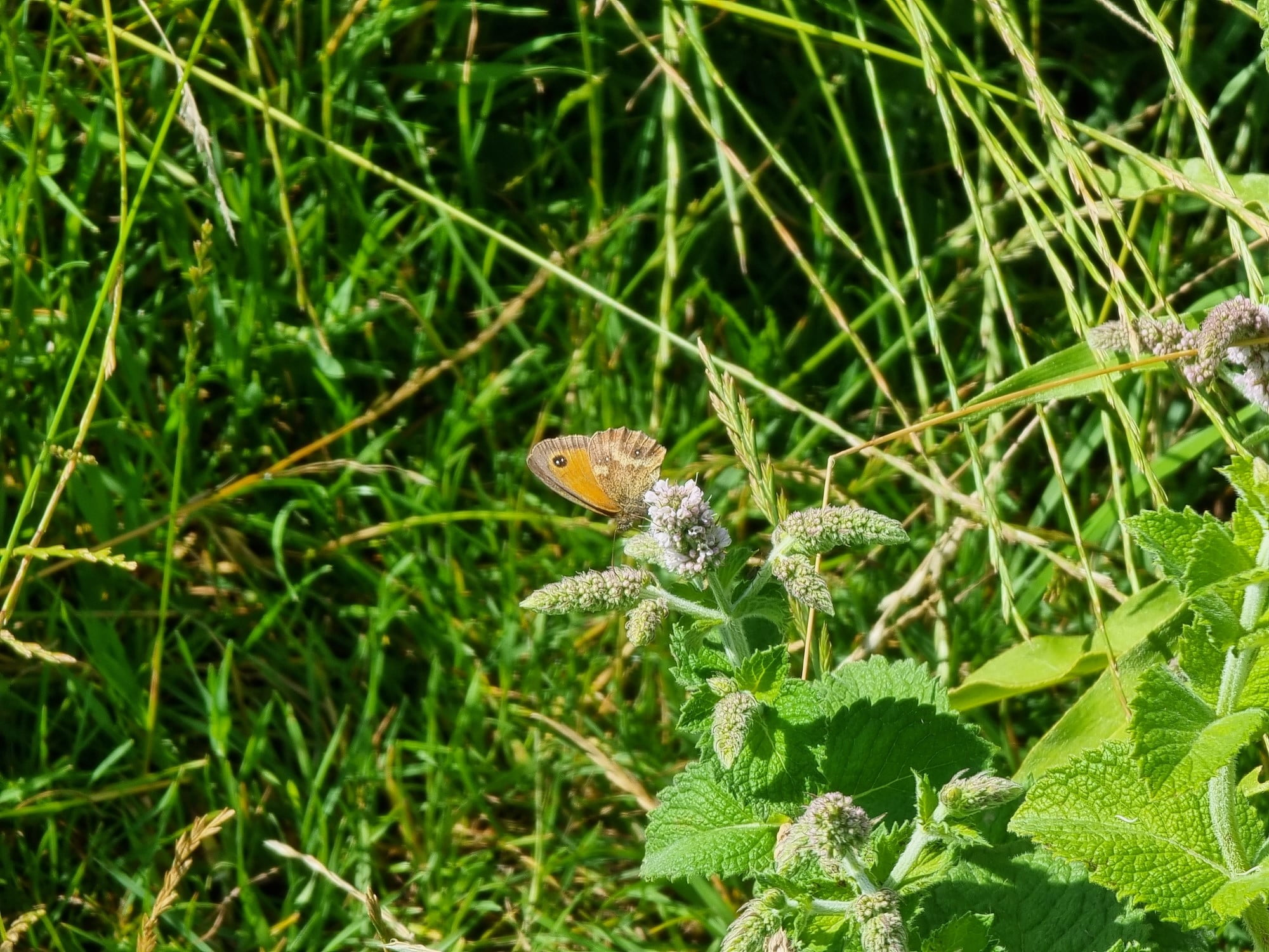 Photo of a butterfly taken with the Galaxy S21 Ultra.