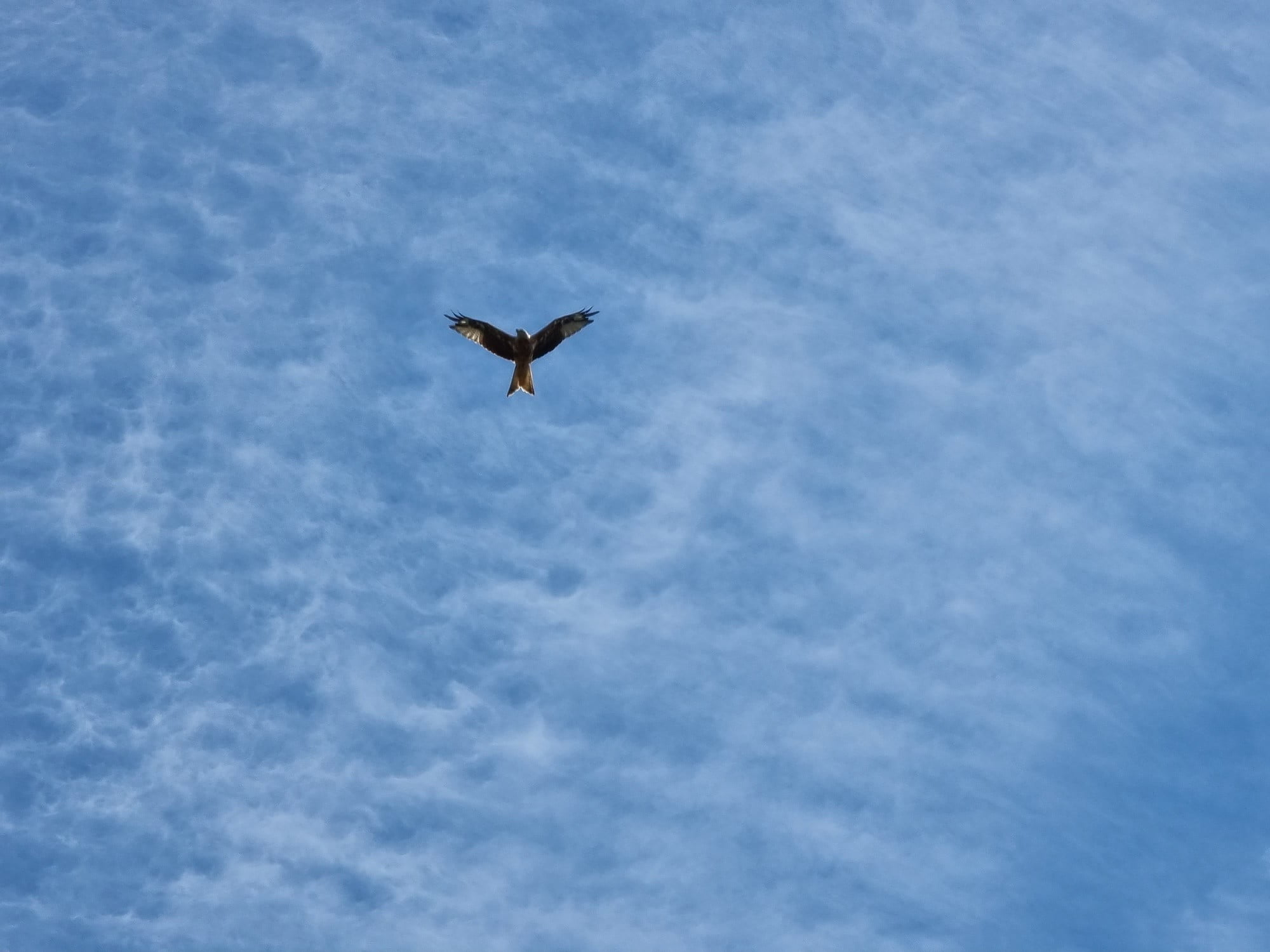 Photo of a hawk taken with the Galaxy S21 Ultra.