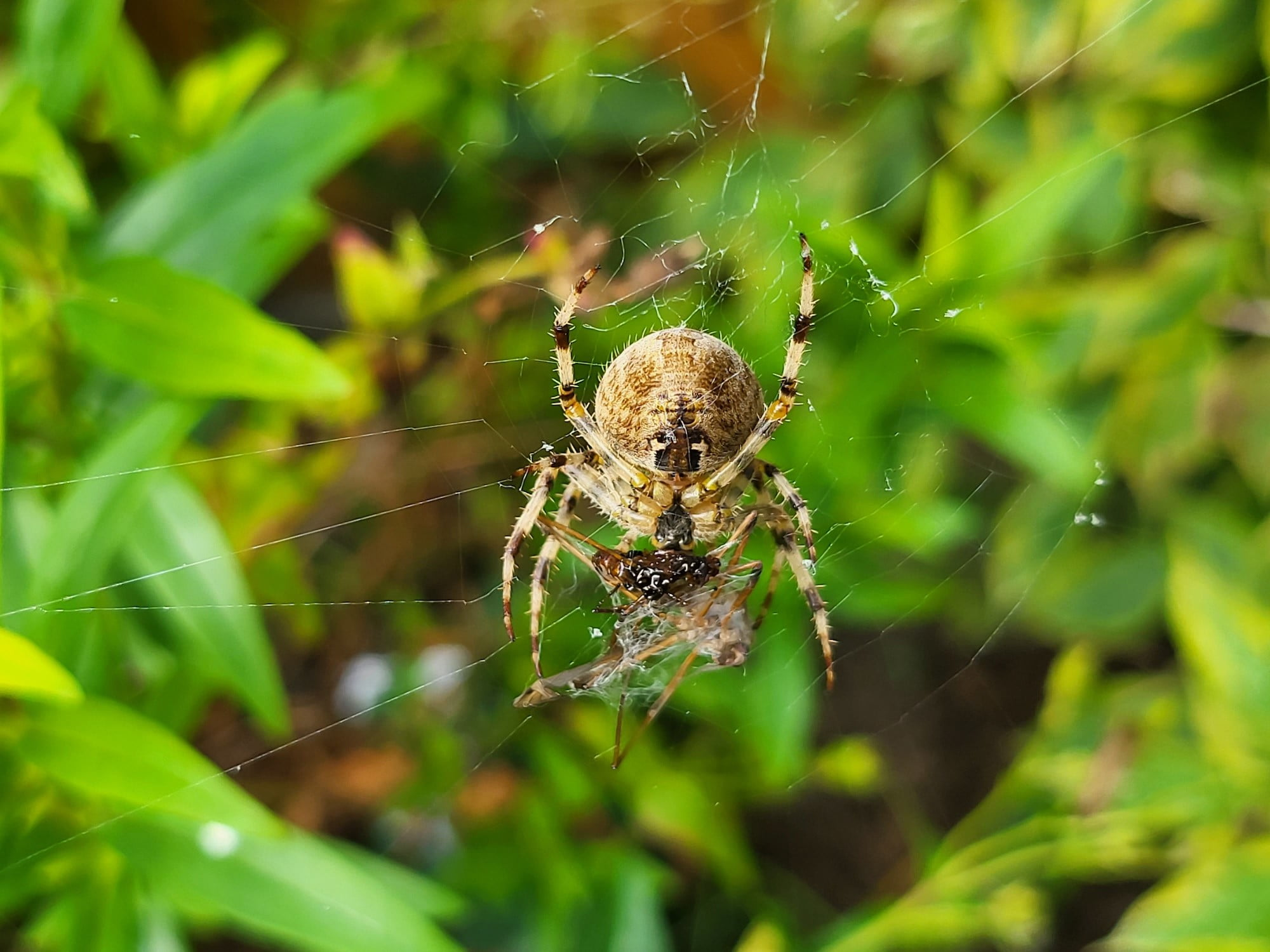 Photo of a spider taken with the Galaxy Z Fold 3.