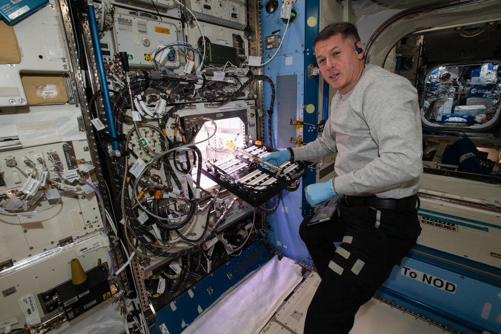 Some like it hot: Astronauts are growing chili peppers on the space station - Digital Trends