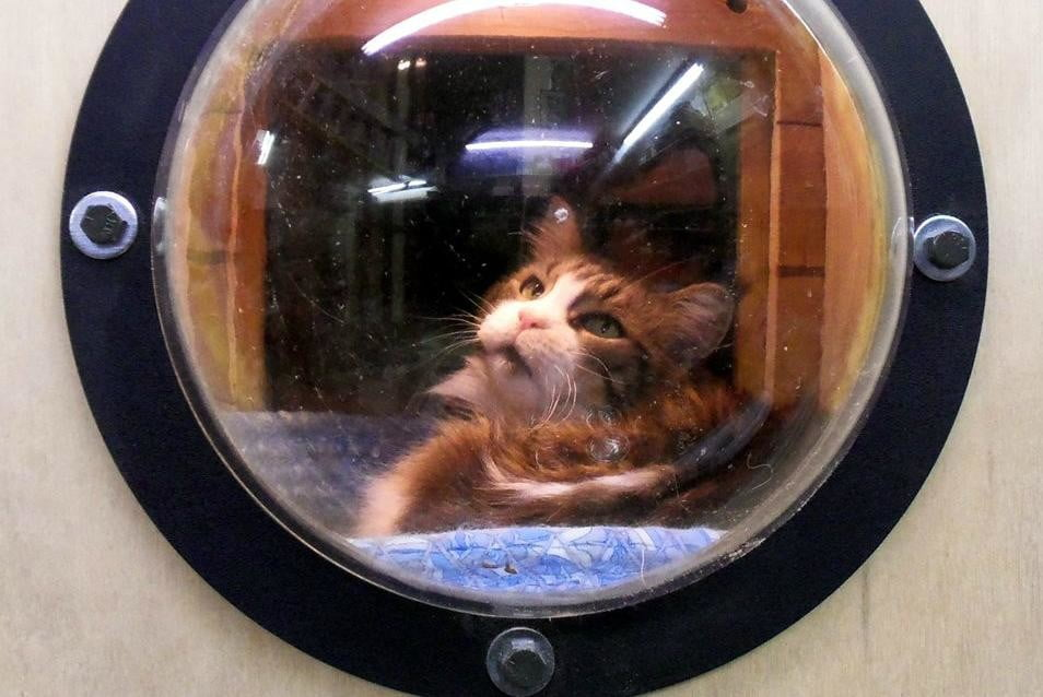 furniture and homes that are made for cat people greg krueger window bubble