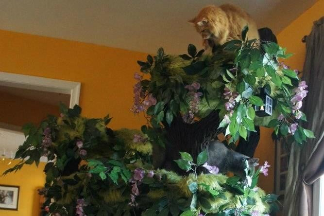 furniture and homes that are made for cat people hidden hollow tree
