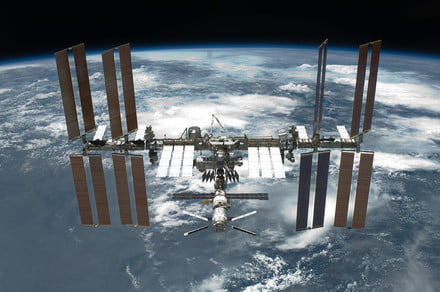 Why is NASA sending slime mold to the space station?