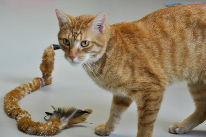 ipet homeplay lets you play with your pets from anywhere pet toy cat