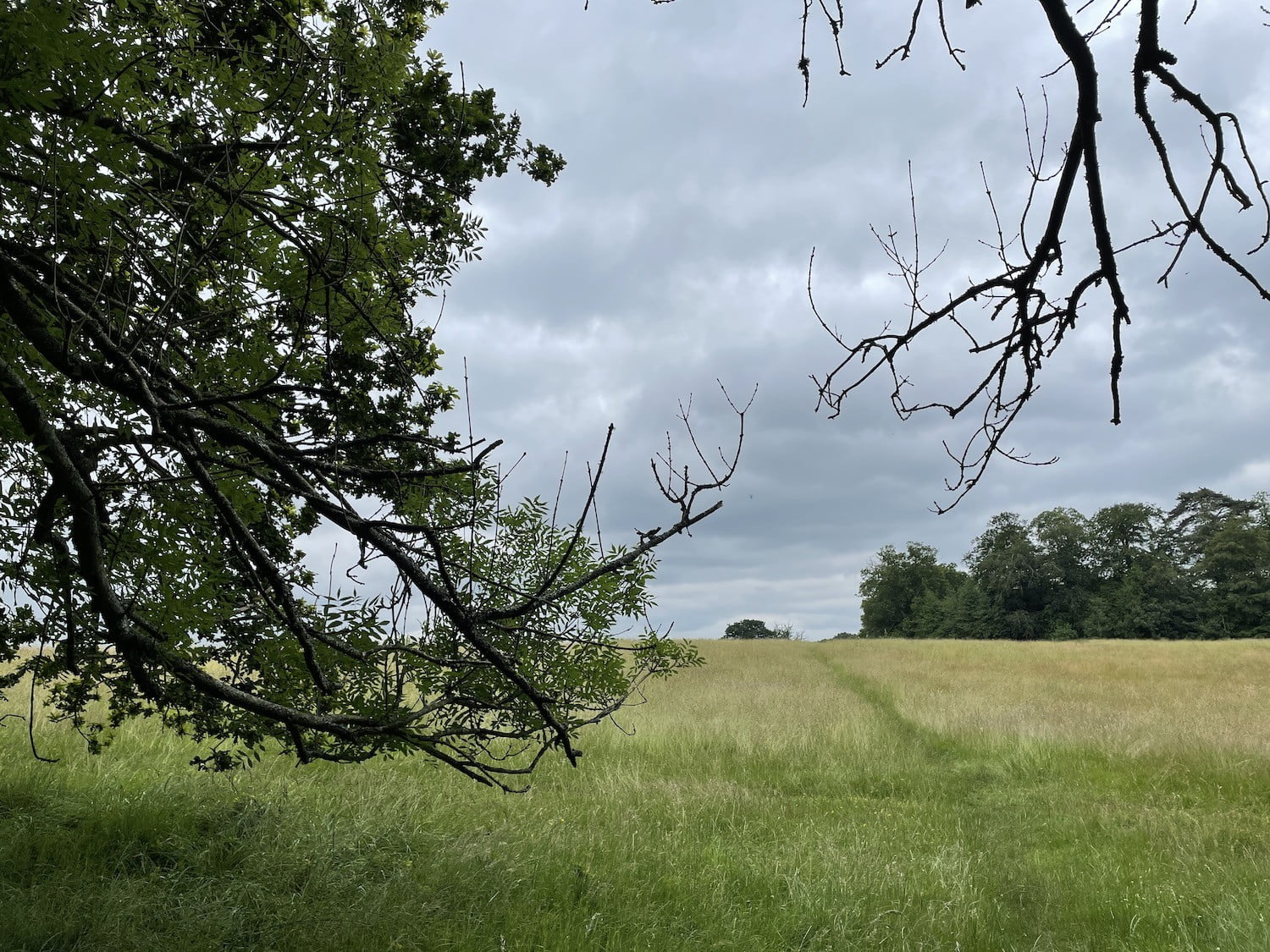Photo of a field and trees taken with the iPhone 12 Pro