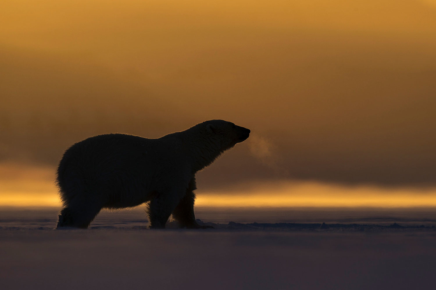 how to photograph the arctic with joshua holko interview svalbard 9628 edit