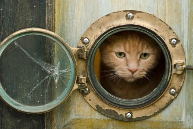 furniture and homes that are made for cat people louise lakier porthole