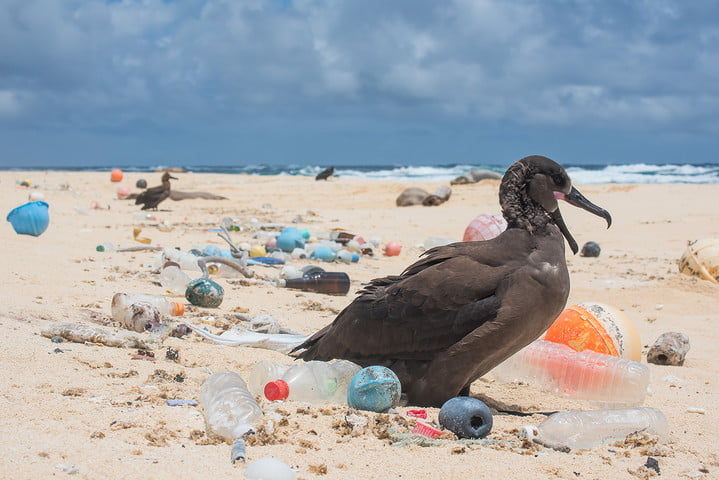 bird on beach surrounded by plastic