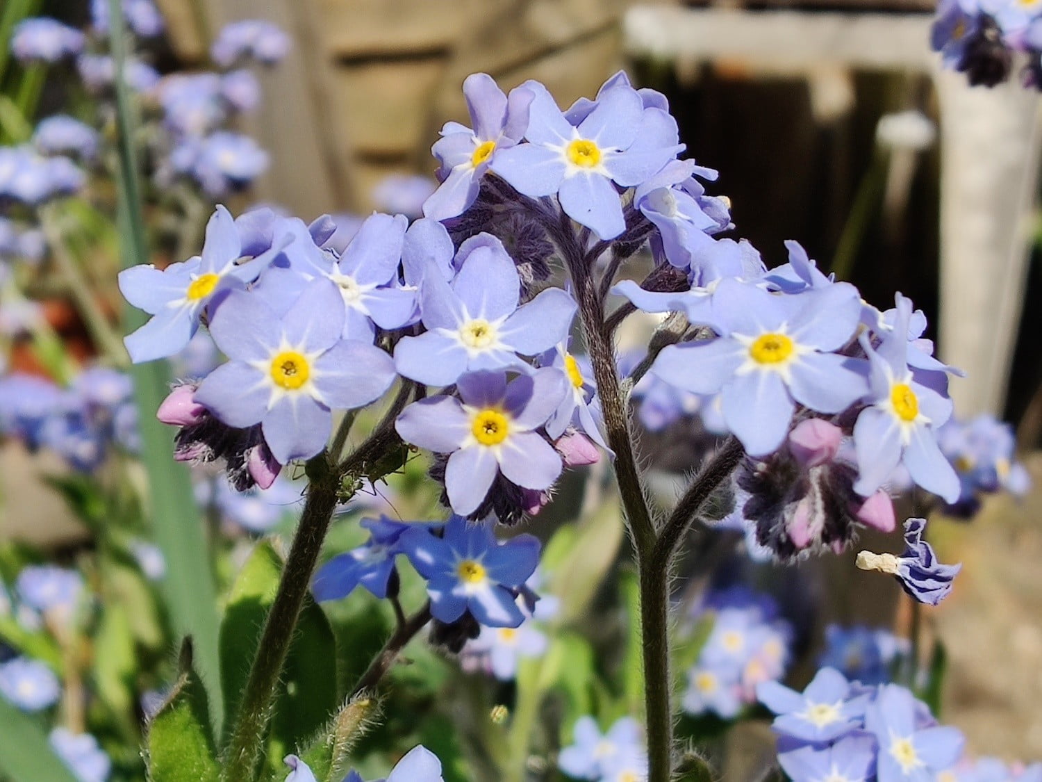 oneplus 8 pro review blue flowers