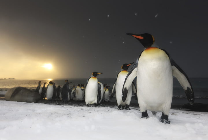 netflix our planet 4k nature documentary penguins