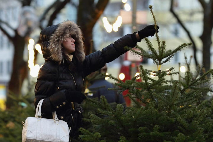 uber plans deliver christmas trees doorstep week picking out a tree