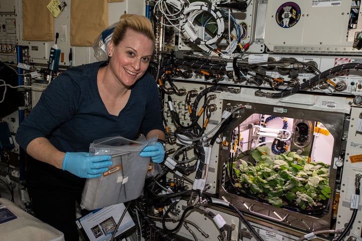 On Nov. 27, 2020, NASA astronaut and Expedition 64 Flight Engineer Kate Rubins checks out radish plants growing for the Plant Habitat-02 experiment that seeks to optimize plant growth in the unique environment of space and evaluate nutrition and taste of the plants.