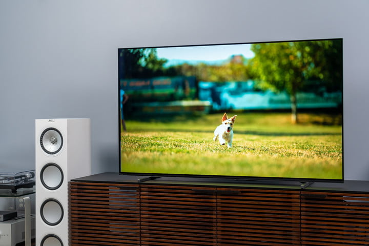 Dog running on the screen of a Sony A80J 4K HDR OLED TV.