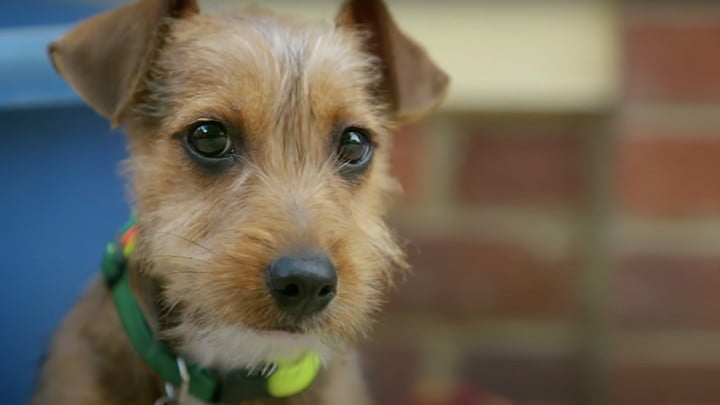 A close-up of a dog from The Dog House: UK on HBO Max.
