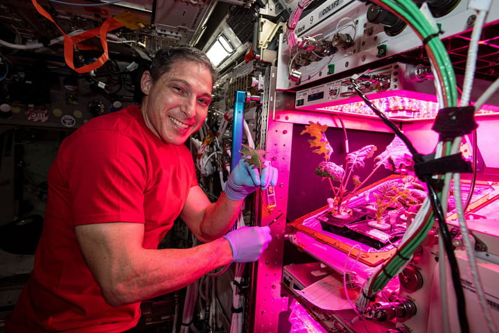 NASA astronaut Mike Hopkins has tended to multiple plant experiments on the International Space Station (ISS). Hopkins believes plants grown in space can help astronauts become more self-sufficient.