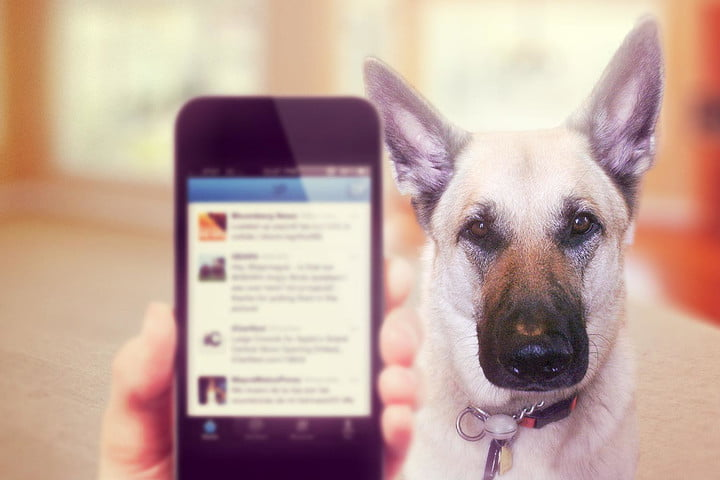 What my dog taught me about my bad technology habits