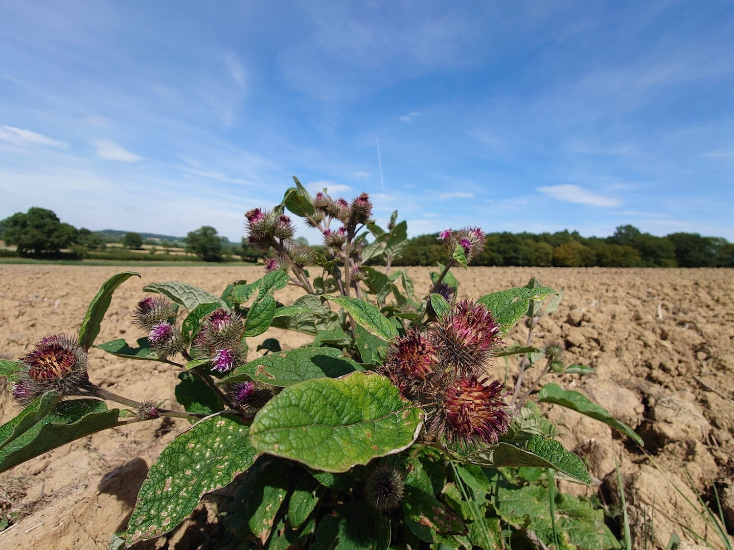 sony xperia 1 ii review thistle